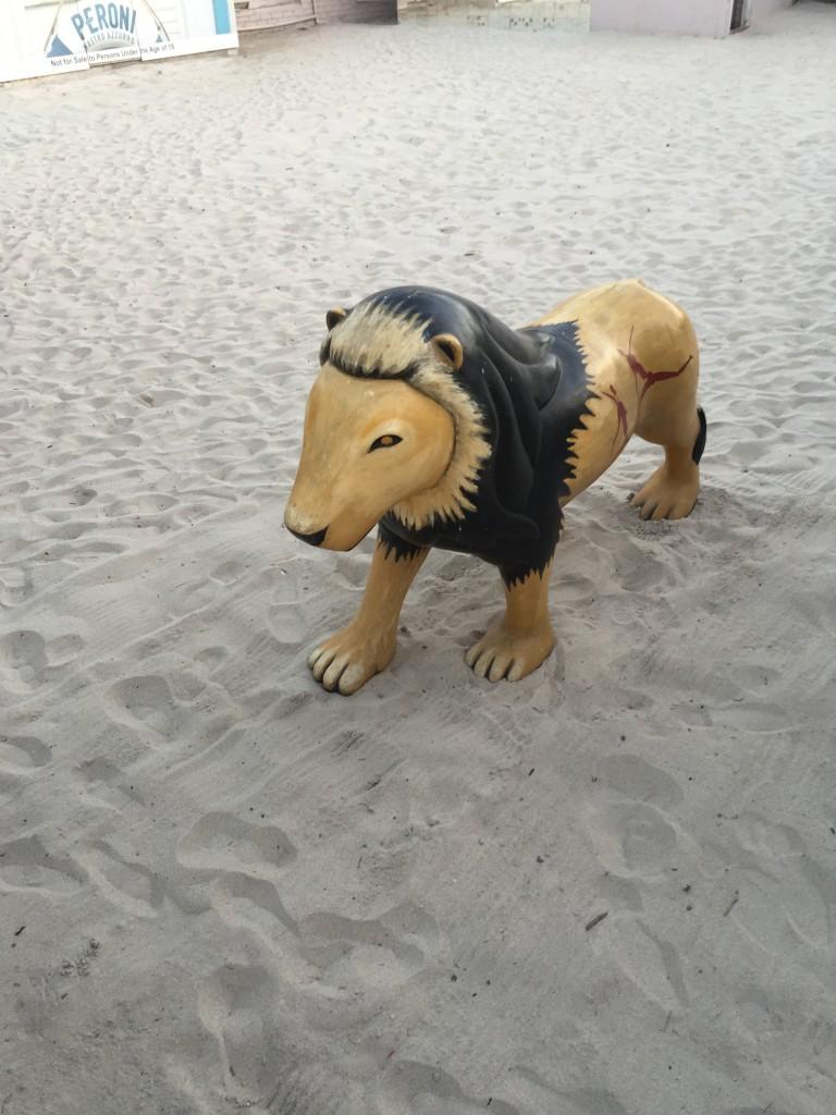 Einzig gesichteter Löwe am Cape Epic